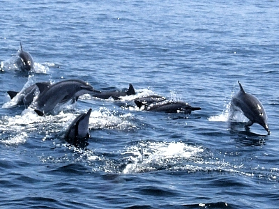 (Tourist Attraction) Dancing with Dolphins and Whales