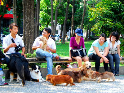 (Tourist Attraction) Dog Walking Fair on Jingguo Parkway in Taichung