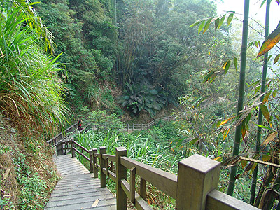 Rueifong Jhukeng River Trail – Taking a Stroll in Forest and Basking in Phytoncide SPA !