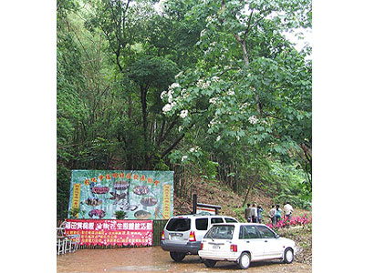 Futian Community – Past Chicken Farm Is Today's Tung Blossom Ecological Park (Tourism Attraction)