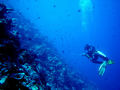 Diving into Manado – Crystal Clear Sea Water Allows Divers to Appreciate the Beauty of Undersea