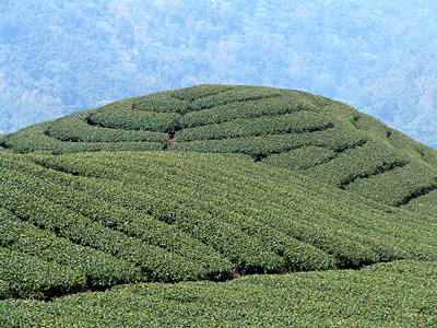 Eight Diagrams Tea Garden – Even Foreigners Will be Stunned! (Tourist Attraction)
