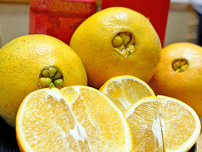 Taitung Navel Orange with a Refined, Juicy Texture and Sweet-smelling Fragrance (Local Specialty)