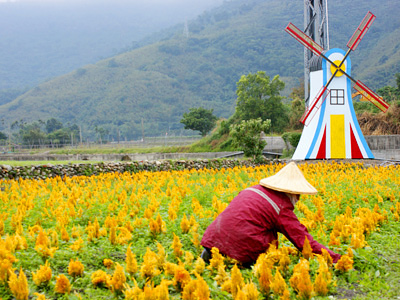 (Spring Tour Itinerary) One-day Tour of Taitung – Things to Do in Taitung