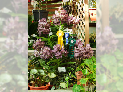 Orchid Show to Celebrate the 25th Anniversary of National Museum of Nature Science
