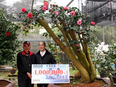 2011 Sanyi Camellia Festival Kicks off on December 17