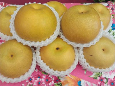 5-star Pear that Perfect for Scorching Hot Summer