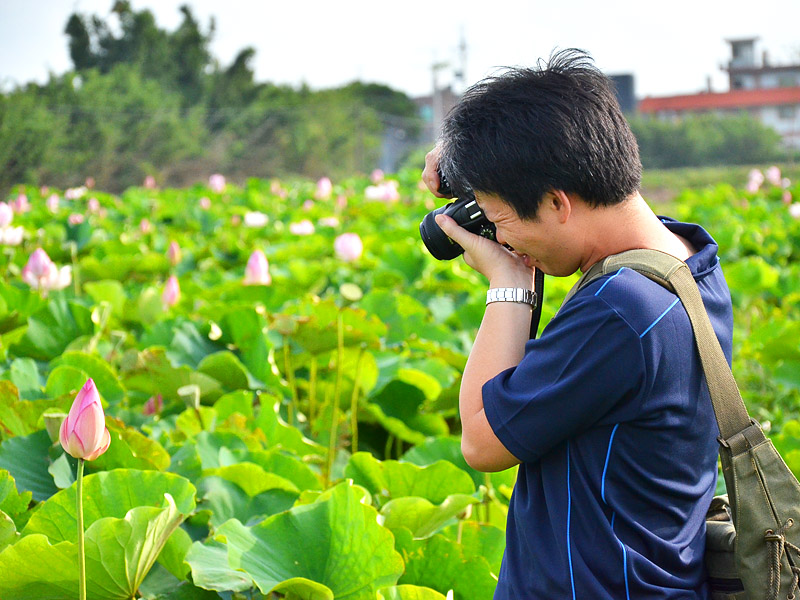【Festival】2012 Taoyuan Lotus Flower Festival Photography Contest Records Charming Scenery