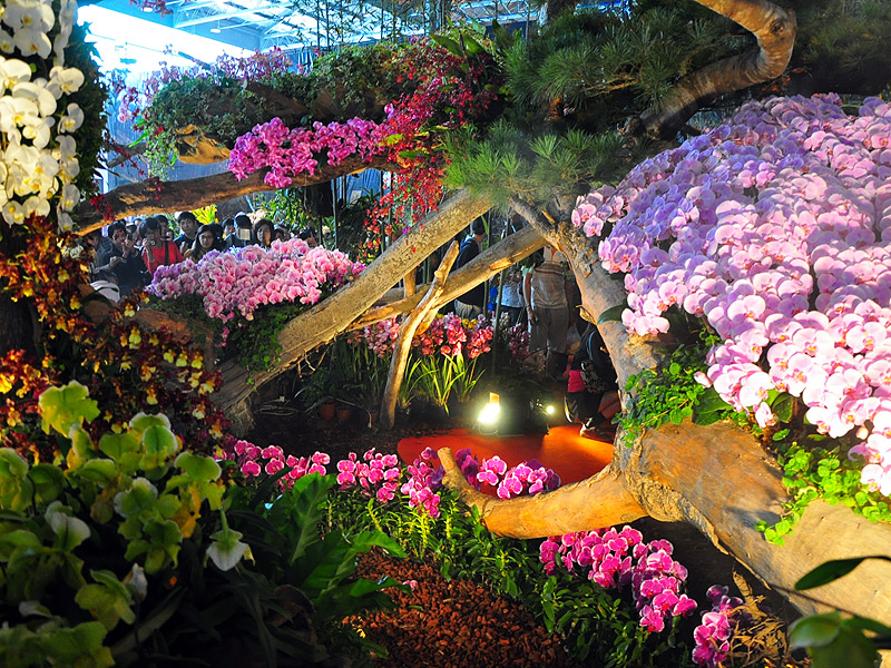 Taiwan International Orchid Show 2014- Amazing Ten